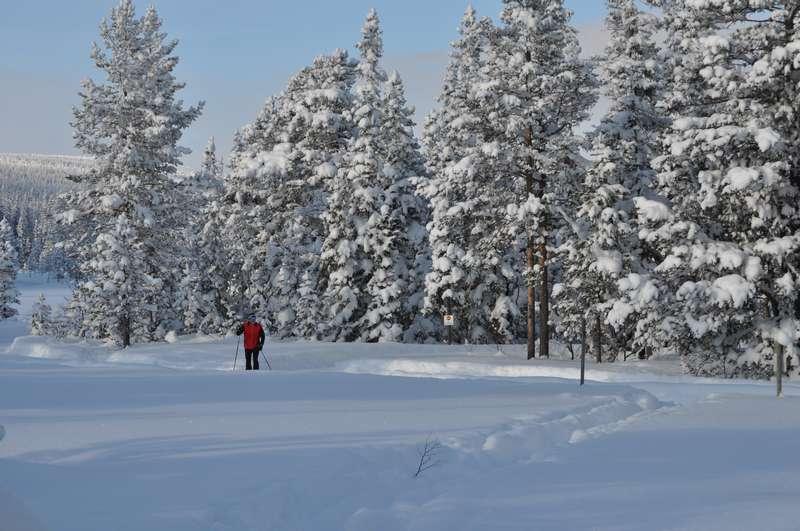 A winter photo from Sälen